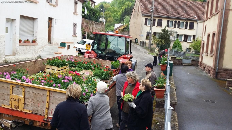 Op ration plantation de fleurs actualit s 2014 walschbronn for Plantation de fleurs